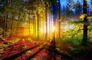 drzewa a zdrowie człowieka