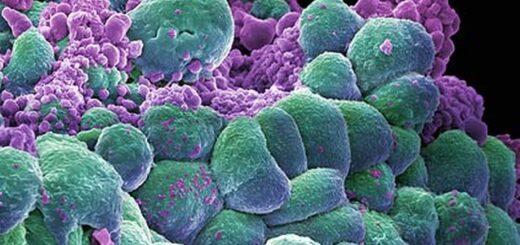 chemioterapia powoduje rozwoj raka