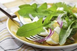 mniszek lekarski salatka