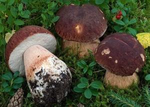 nietypowe potrawy z grzybow lesnych