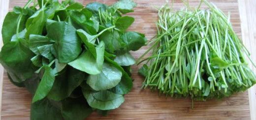 rukiew wodna najzdrowsze warzywo na świecie