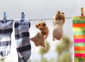Naturalne środki do prania i czyszczenia