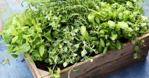 Aromatyczne zioła w kuchni