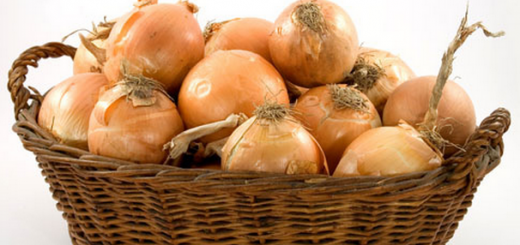 Łupiny cebuli najlepszym źródłem kwercetyny