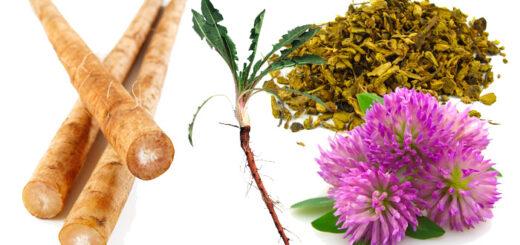 Choroby wątroby – naturalne substancje lecznicze i regeneracyjne