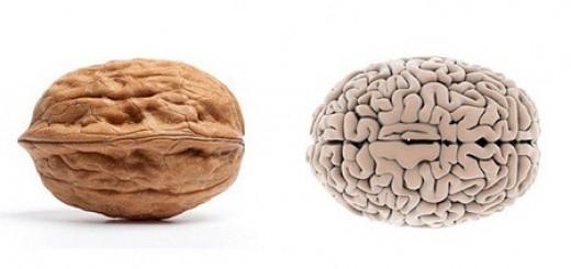 Orzech mózg