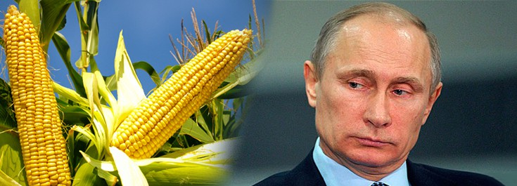 Rosja GMO
