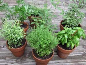 Co warto wiedzieć o ziołach