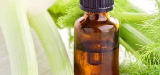 Olejek z kopru włoskiego - przeciw nowotworom i wielu innym chorobom