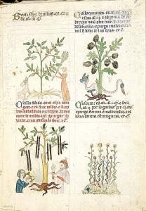 historia ziololecznictwa