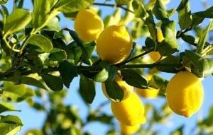 лимонно-свойства