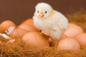 Dlaczego święcone jajka smakują najlepiej