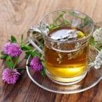 Koniczyna czerwona herbatka