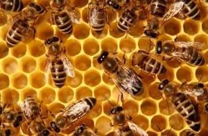 pszczoły giną
