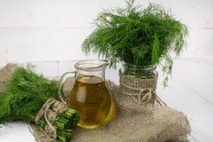 Dysbakterioza - ludowy przepis - nasiona kopru ogrodowego z olejem