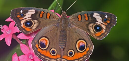 Motyle a homeopatia