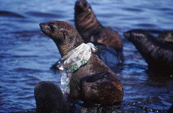 Plastikowe butelki szkodliwe dla zdrowia i środowiska