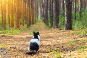 Wyzdrowiałam, bo rozchorował się mój kot - prawdziwa historia