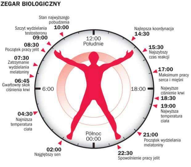 [Obrazek: zegar-biologiczny.jpg]
