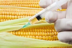 GMO nowej generacji stworzy pokolenie Frankensteinow