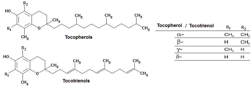 Witamina E 8 związków