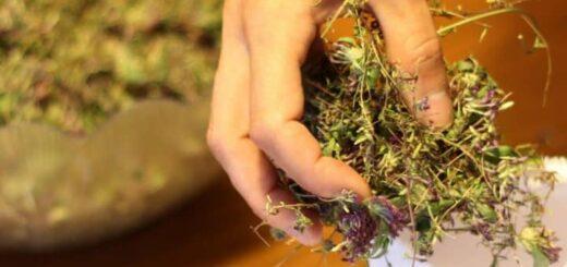 Wypełnij poduszki ziołami a zapewnisz sobie zdrowy sen, relaks i ..terapię