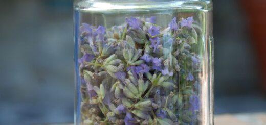 Larendogra Królowej Elżbiety - odmładzający tonik z lawendy i rozmarynu