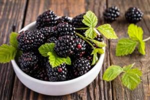 Jeżyna - liście i owoce - lecznicze właściwości i receptury