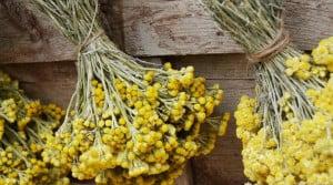 Kocanka piaskowa - wspaniałe ziele na wątrobę i trawienie - przepisy