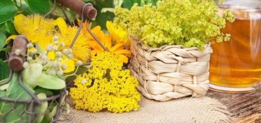 W czerwcu, w czas letniego przesilenia zioła mają największą moc
