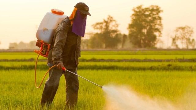 Monsanto, roundup, randap odszkodowanie