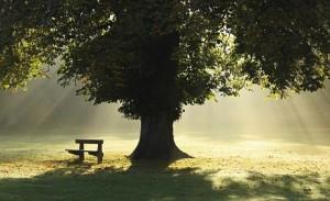 przytul się do drzewa