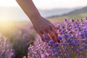 zioła dla cery tłustej mieszanej suchej