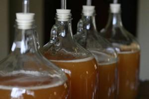 cydr fermentacja