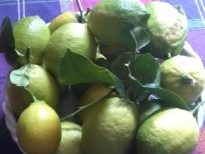 cytryny ekologiczne