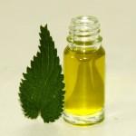 olejek z pokrzywy