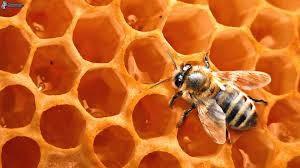 balsam z wosku pszczelego ludowa receptura