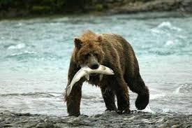 łosoś dziki Alaska