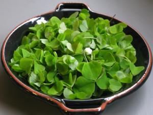 szczawik zajeczy salatka