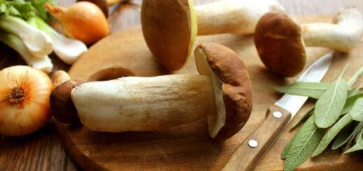 Grzyby leśne - przepisy na dania z regionalnej kuchni włoskiej