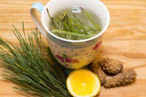 Herbatka z igieł sosnowych