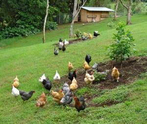 Produkcja żywności to nie to samo co uprawa i hodowla
