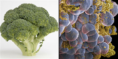 brokul przypomina komorki rakowe