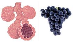 winogrona pluca