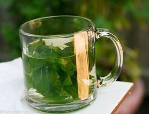 herbatka z bazylii lecznicze