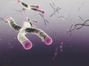 telomery DNA traganek