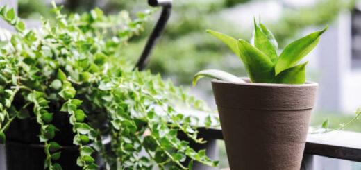 Jakie rośliny doniczkowe najlepiej oczyszczają powietrze w mieszkaniu?