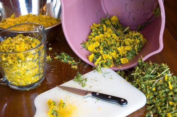 Mniszek lekarski - majowe złoto łąk i trawników