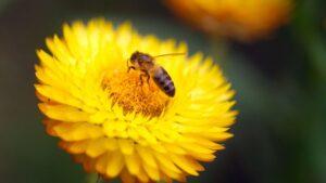 Pszczoły masowo giną – stan alarmowy w ulach na całym świecie