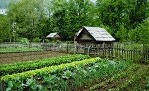Rolnictwo małe rodzinne gospodarstwa